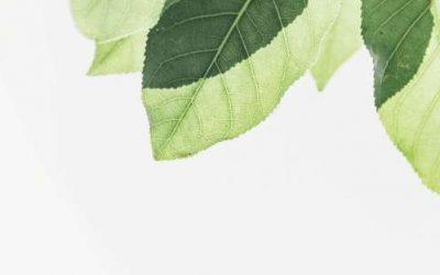 Materiales y vinilos libres de PVC: la revolución ECO de Spandex